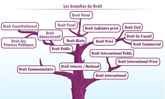 Unjf Introduction Au Droit